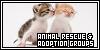 Animal Rescue & Adoption Groups: Saving a Billion Precious Lives at a Time