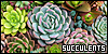 Succulents: Timeless