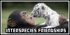 Interspecies Friendships: Funny Pair