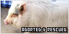 Adopted and Rescued Animals: Saved