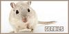 Gerbils: Little Nibbler